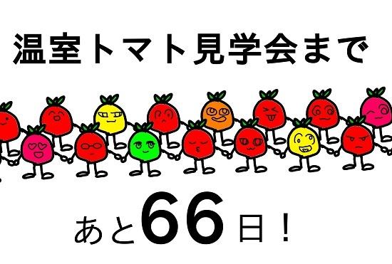 トマト66