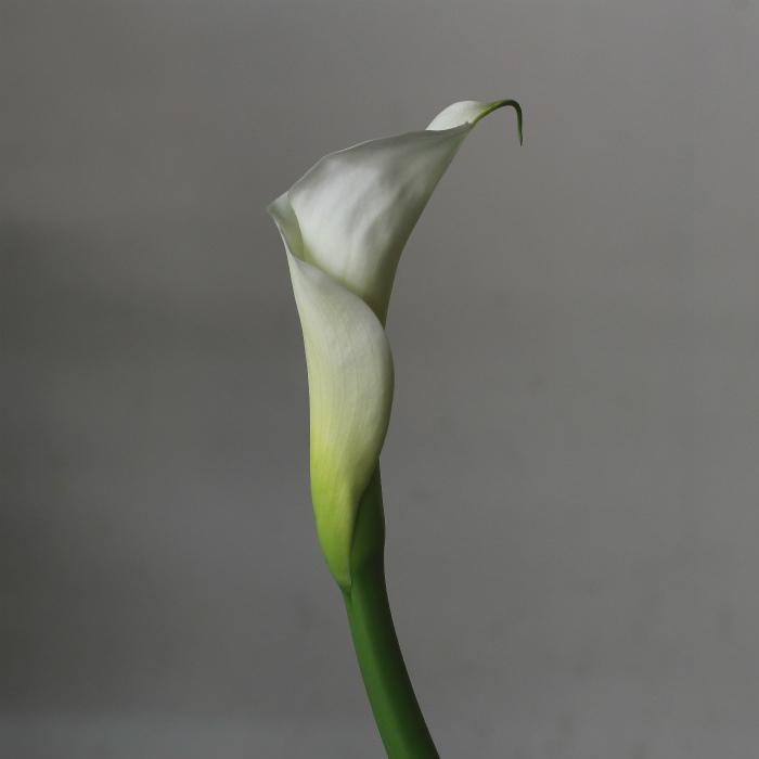 zc カラー 花b