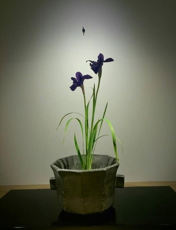 zzr 花:菖蒲 器:李朝石火鉢