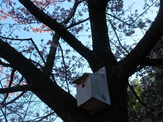 8F14 小鳥小屋 0212