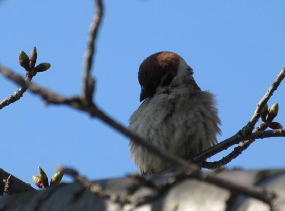 2E01 小鳥 0322