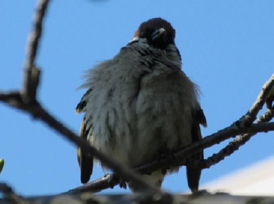5E02 小鳥 0322