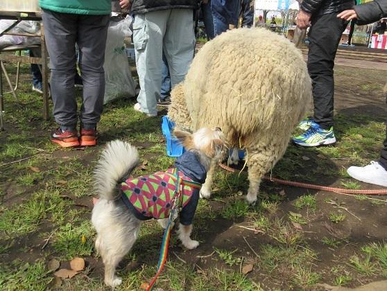 9J11 羊の匂い 0402