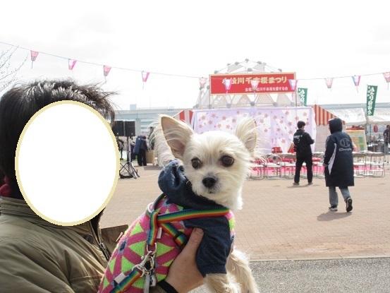 1D01S 小松川桜まつり 0402 (1)