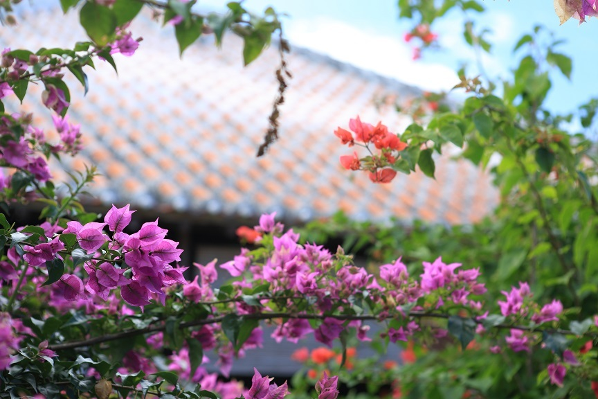 竹富島、13