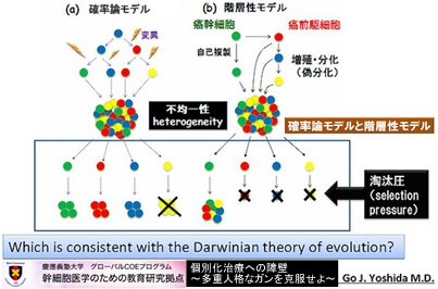 がん細胞の集団モデル
