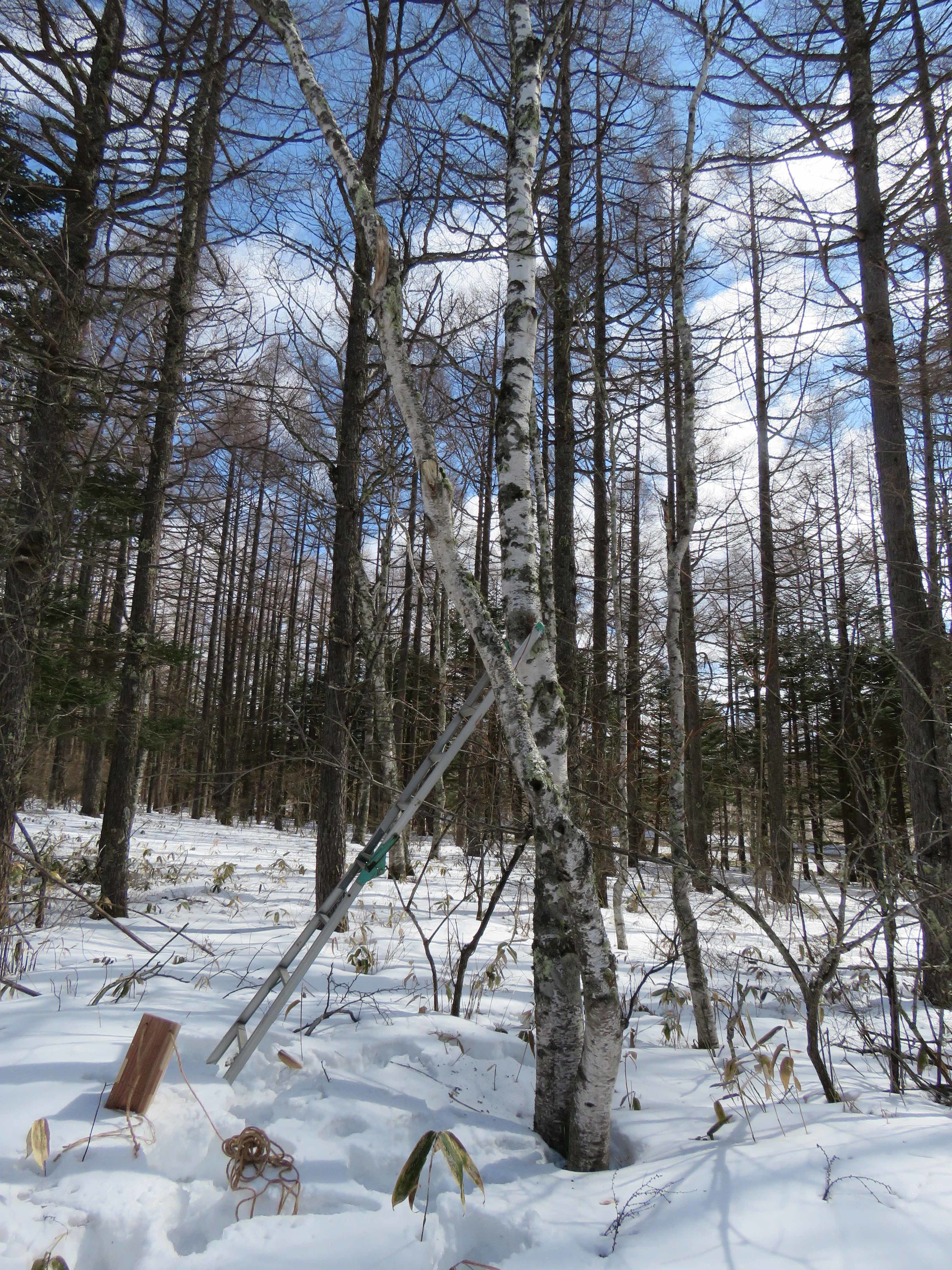 蓼科の森B_170316