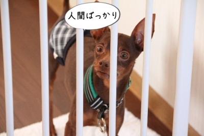 2016_12_23_1167.jpg