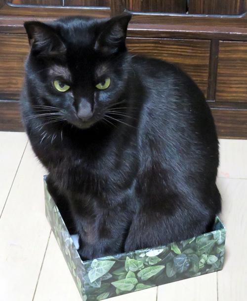 箱の中のチョコ1