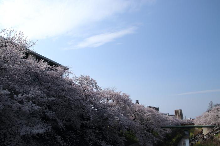 170409-yama-29.jpg