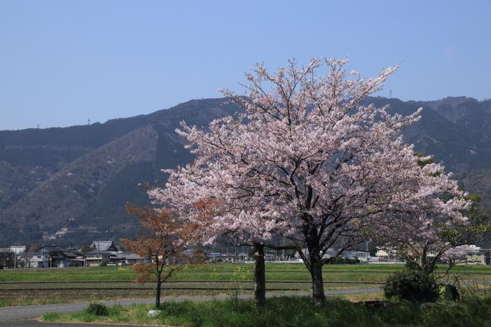 170414-hanamo-11.jpg