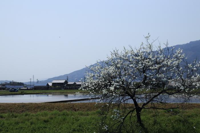 170414-hanamo-15.jpg