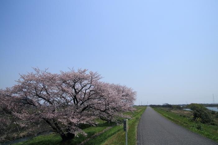 170414-hanamo-65.jpg