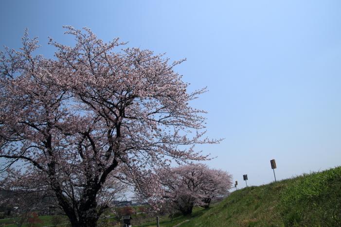 170414-hanamo-70.jpg