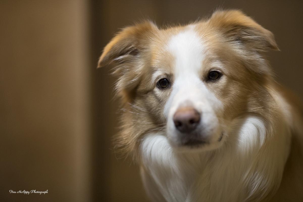 シニア犬講習