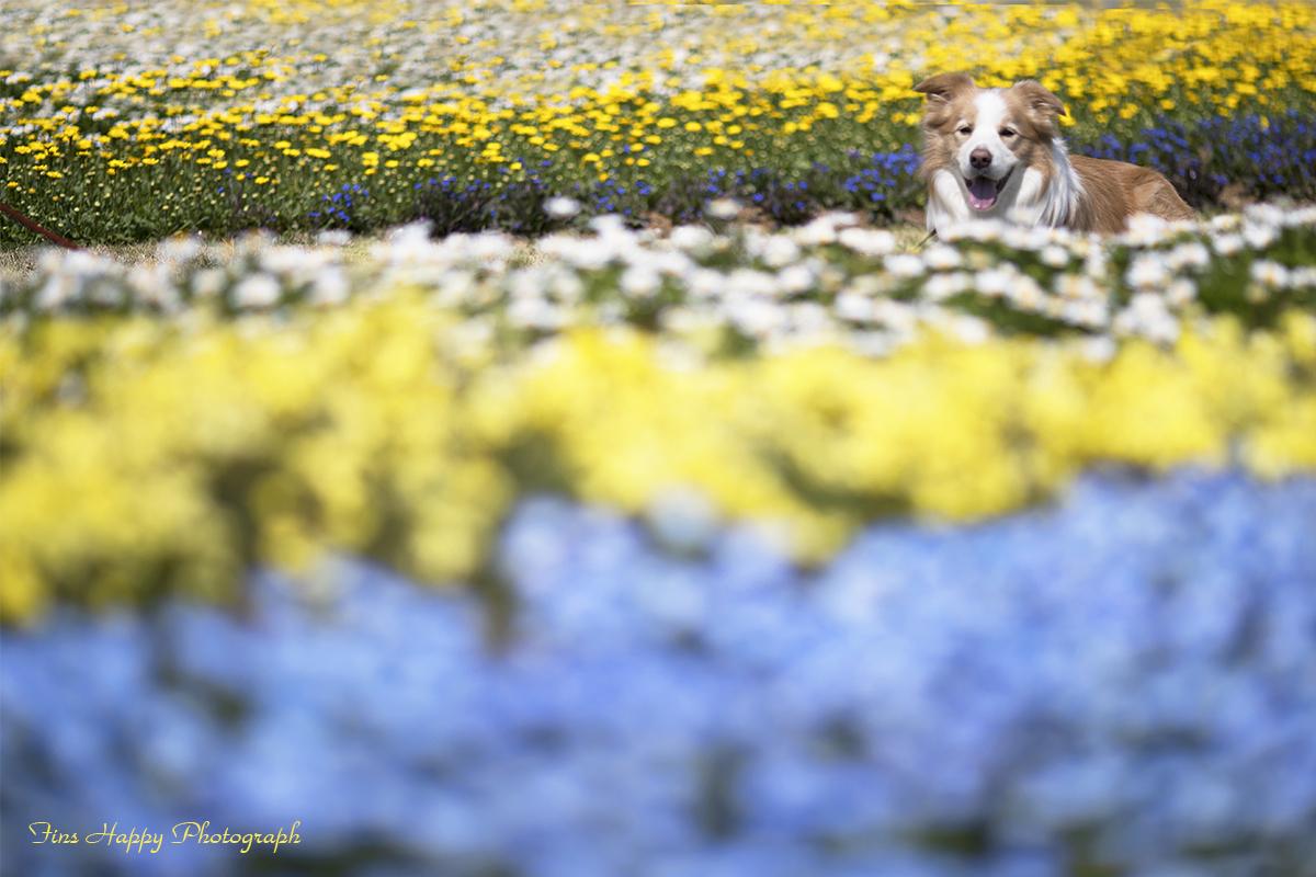 春色の花畑
