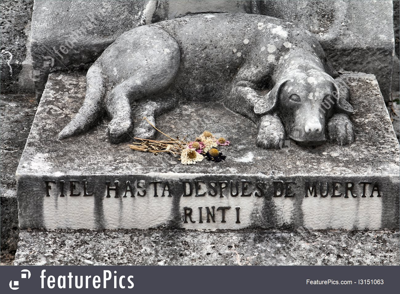 dog-grave-stock-picture-2151063Dog grave