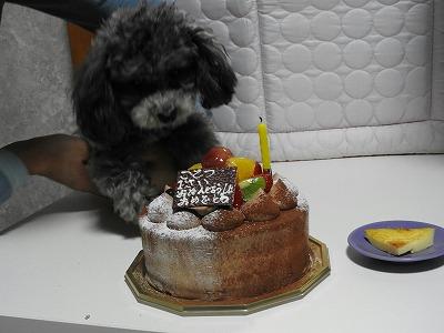 s-こてつとケーキ