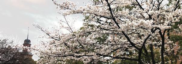 クラーク記念館と桜