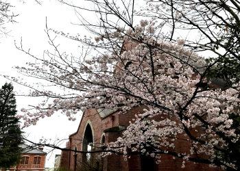礼拝堂と桜