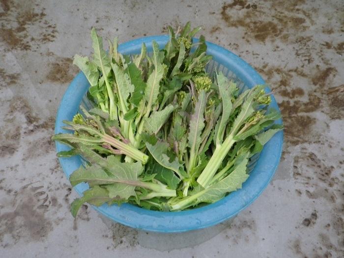 収穫3_17_02_11