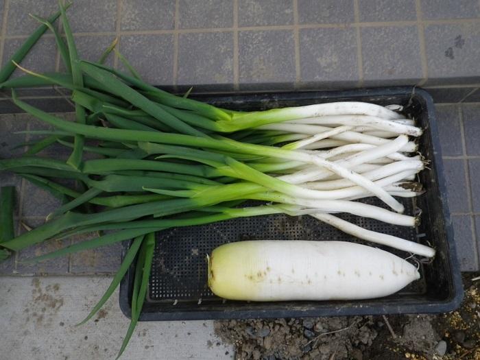 収穫2_17_02_18