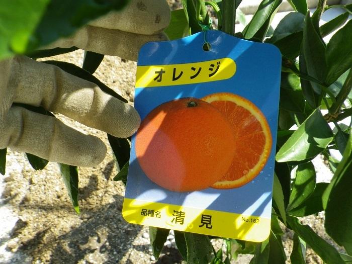 オレンジ17_03_12