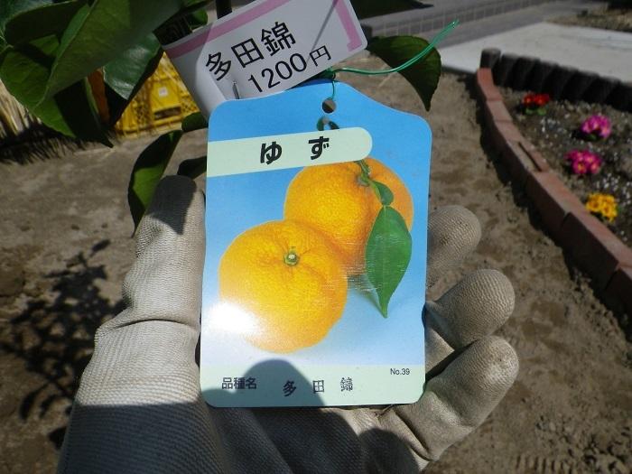 柚子17_03_12