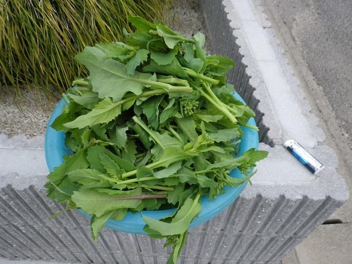 収穫17_03_30