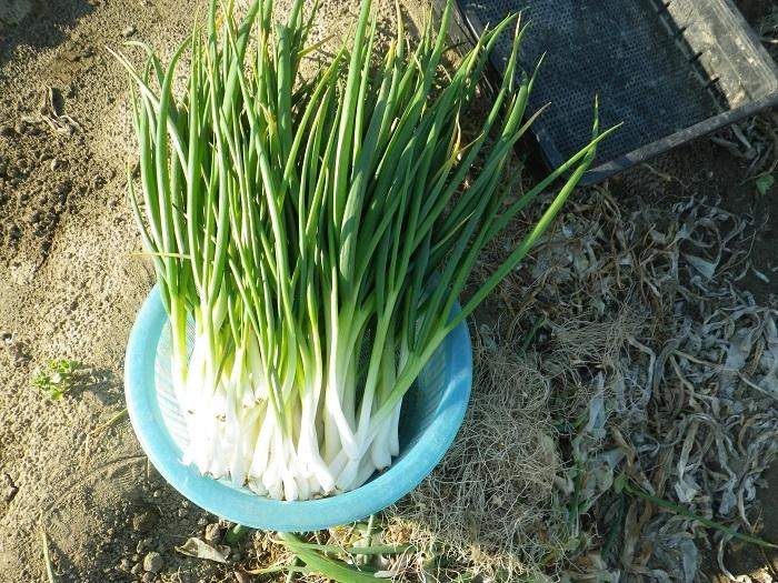 収穫2_17_04_02