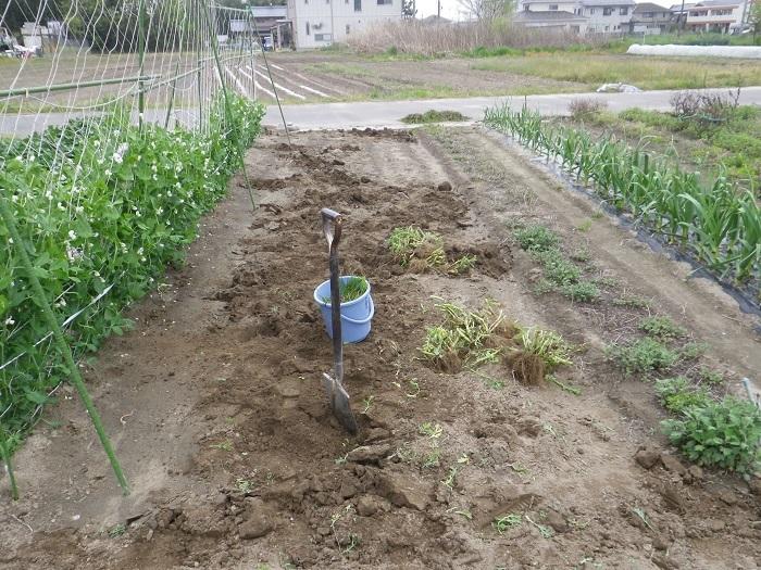夏野菜用地5_17_04_21