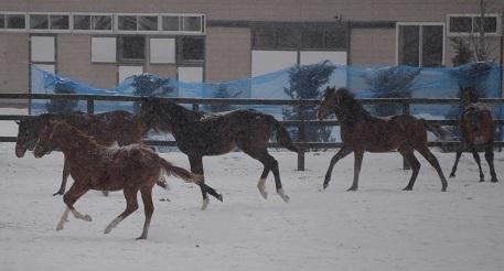 1・吹雪・雪の中