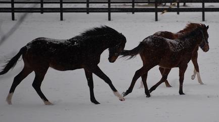 1・吹雪・牡馬