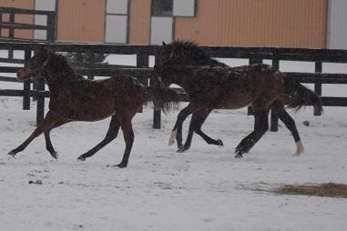 1・吹雪・走る