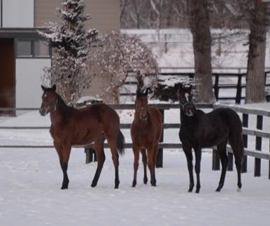 1・吹雪・牝馬