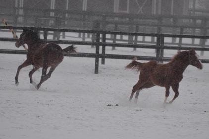 1・吹雪・競走
