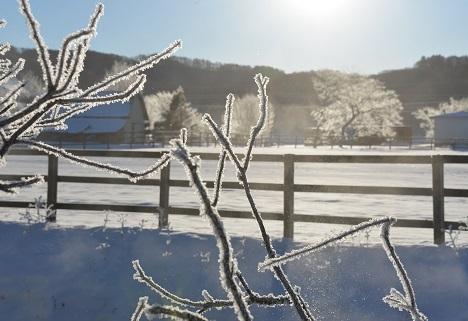 1・近・霧氷