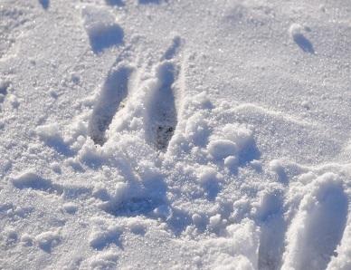 1・冷・足跡