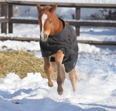 3・大雪・走るよ