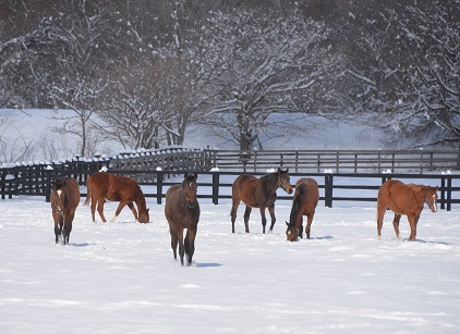 3・雪・牡馬
