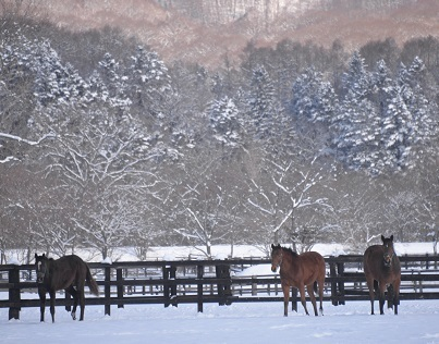 3・雪・牝馬