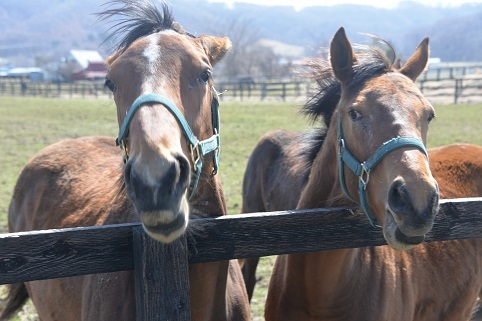 4・1歳・牝馬たち