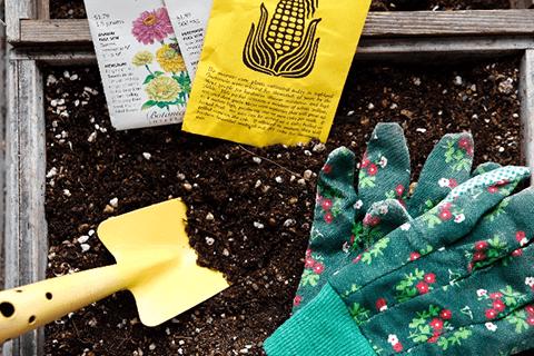 多肉植物の土の選び方