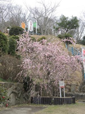 2017.03.須磨アルプス