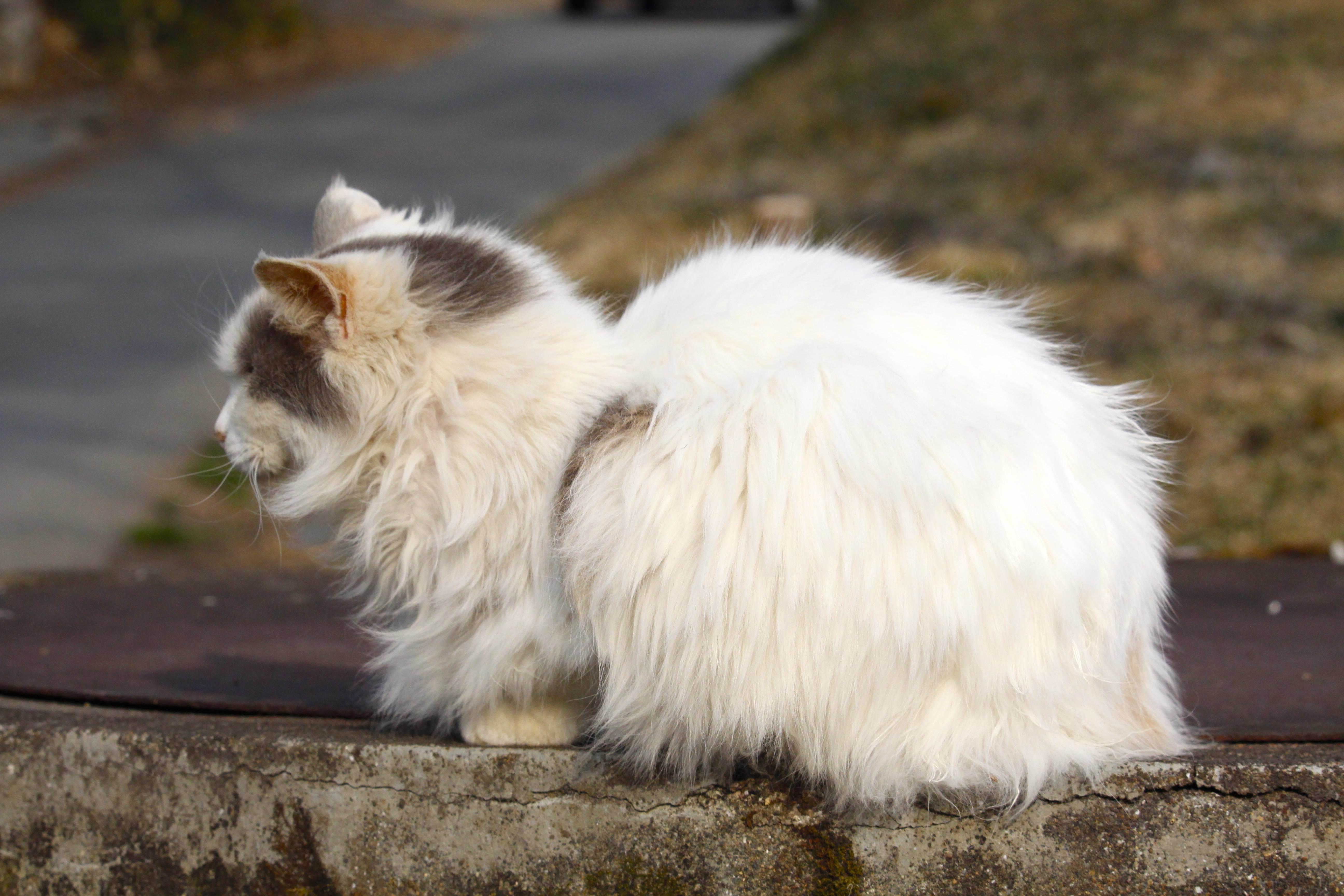 20170305白猫1