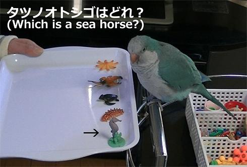 海洋生物1_10