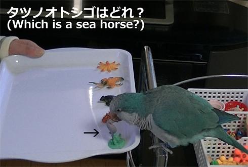 海洋生物1_11