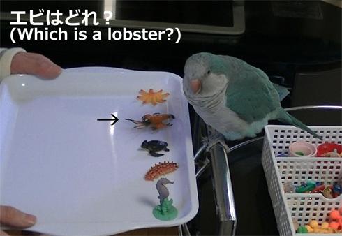 海洋生物1_4