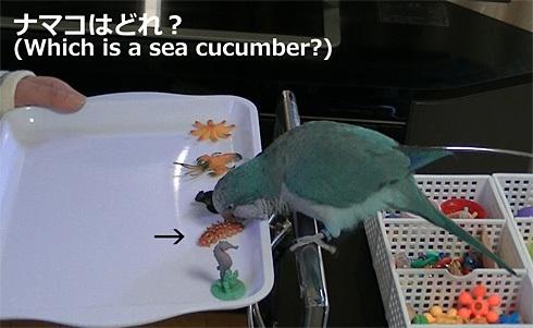 海洋生物1_6