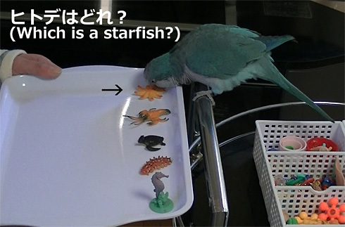 海洋生物1_8